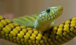 Drømme om slange: Drømmetydning, Drømmesymboler
