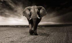 Drømme om dyr: Drømmetydning, Drømmesymboler