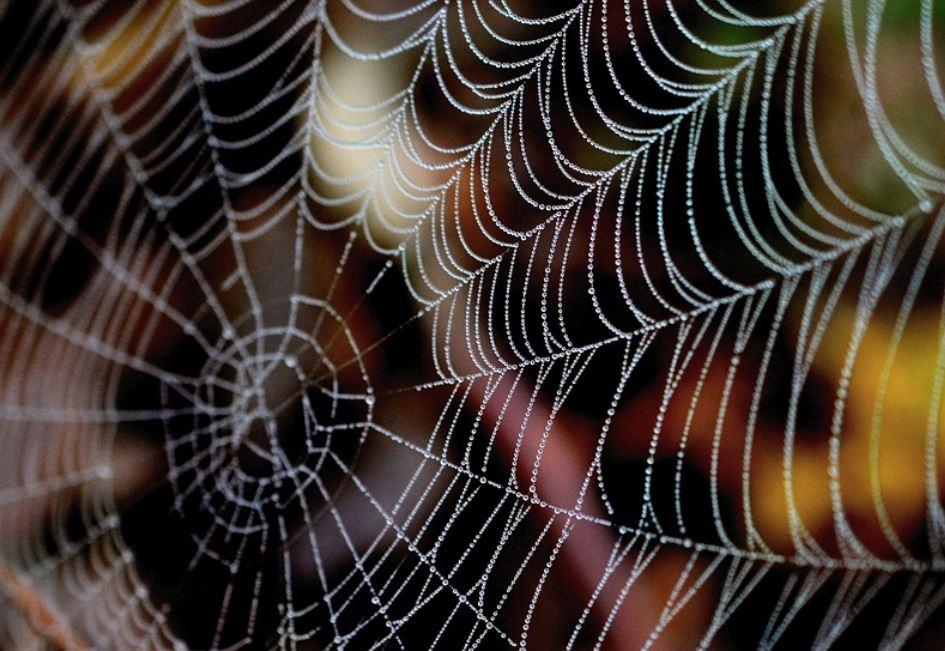 Drømmetydning Edderkoppespind/Spindelvæv